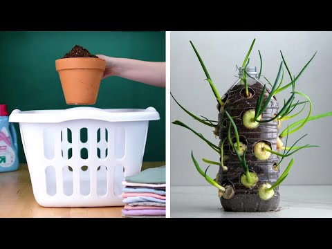 14 Clever Plant Hacks That Will Really Grow on You! Blossom — YouTube