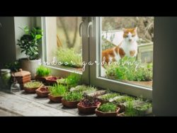 #35 Grow Vegetables Indoors: Microgreens & Sprouts — From Seed to Harvest — YouTube